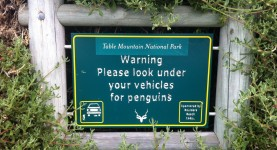 Penquins are near